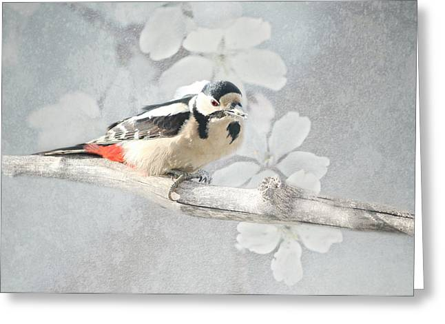 Feeding Mixed Media Greeting Cards - Woodpecker Greeting Card by Heike Hultsch