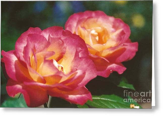 Nature Center Greeting Cards - #704 1a Love Roses Double Delight Perfect Together Perfect Moment Greeting Card by Robin Lee Mccarthy Photography