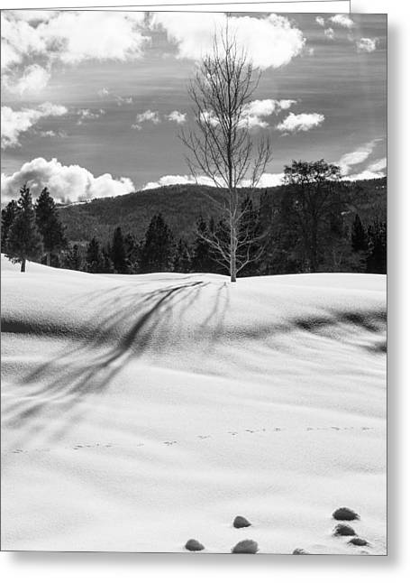 Siskiyou County Greeting Cards - 730 Greeting Card by Randy Wood