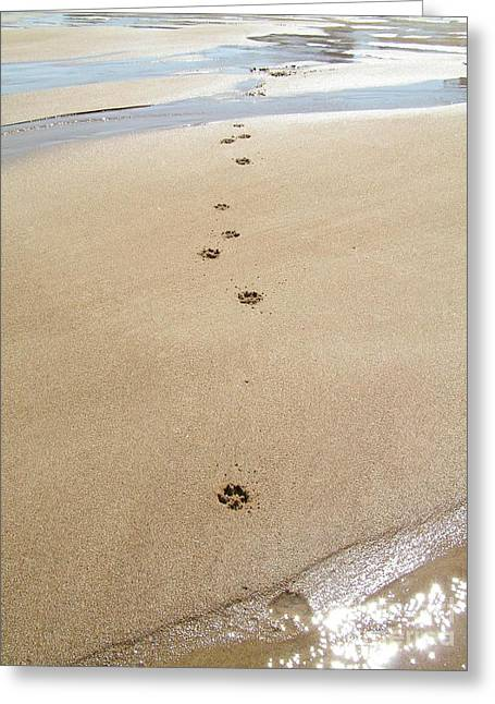 Dog Beach Card Greeting Cards - #736 D2 Paw Prints in the Sand Plum Island Greeting Card by Robin Lee Mccarthy Photography