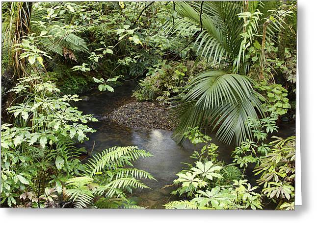 Forest Creek Greeting Cards - Jungle Greeting Card by Les Cunliffe