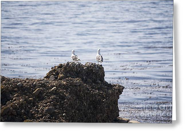 Point Lobos Digital Greeting Cards - 795 pr Two Birds On A Rock  Greeting Card by Chris Berry