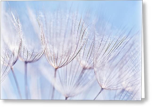 Abstract Nature Greeting Cards - Abstract dandelion flower background Greeting Card by Anna Omelchenko