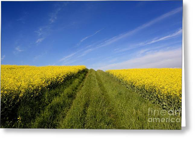 Growth Photographs Greeting Cards - Agricultural landscape. Auvergne. France. Greeting Card by Bernard Jaubert