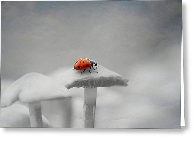 Fungi Mixed Media Greeting Cards - Beetle Greeting Card by Heike Hultsch