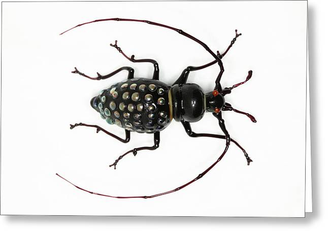 Beetle Greeting Card by Tomasz Litwin