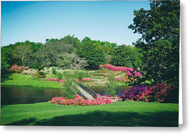 Lovely Pond Greeting Cards - Bellingrath Gardens - Alabama Greeting Card by Mountain Dreams