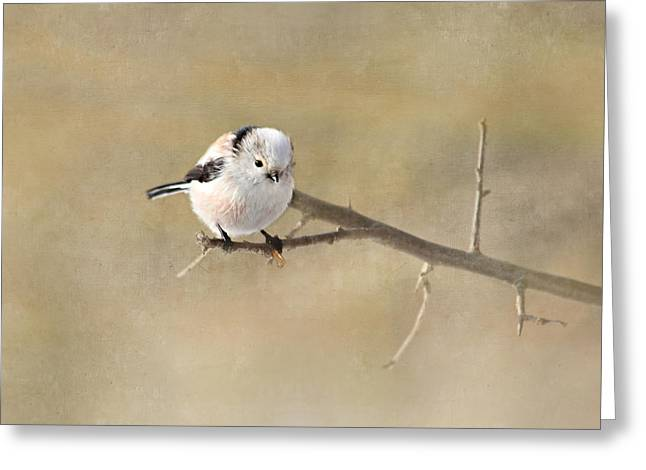 Small Canvas Greeting Cards - Bird Greeting Card by Heike Hultsch