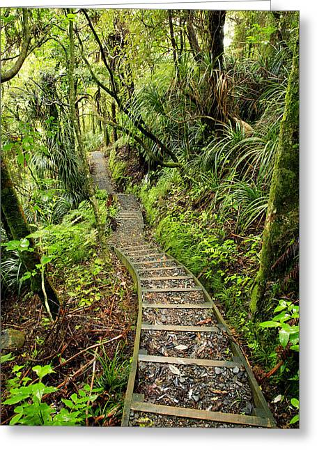 Tropical Photographs Greeting Cards - Forest trail Greeting Card by Les Cunliffe