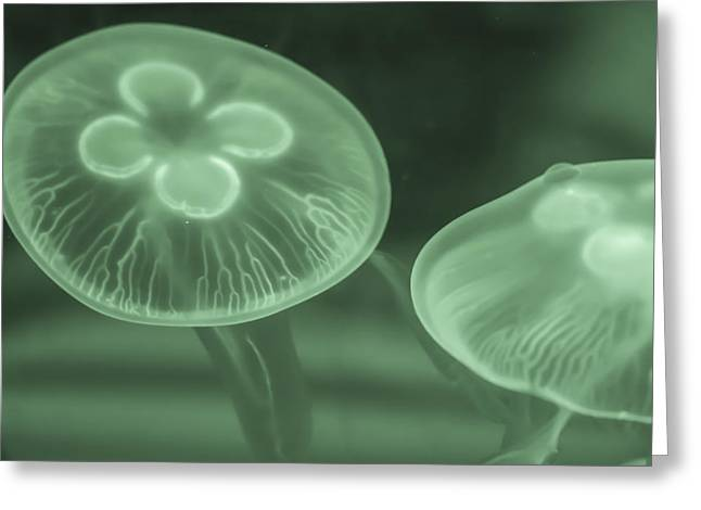 White Spotted Jellyfish Greeting Cards - Jelly Fish Greeting Card by Jijo George