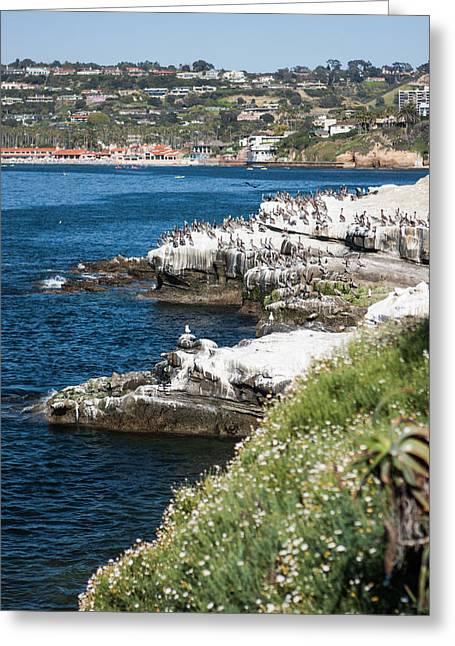 San Diego Greeting Cards - La Jolla Series Greeting Card by Josh Whalen