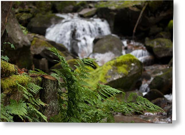 Peaceful Scene Greeting Cards - Mountain Stream Greeting Card by Lorenzo Tonello