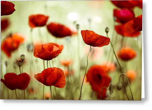 Summer Poppy Greeting Card by Nailia Schwarz
