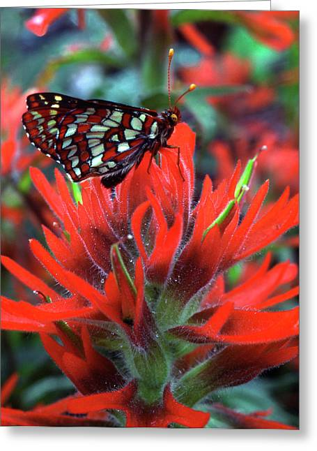 Usa, Oregon, Mt Hood National Forest Greeting Card by Jaynes Gallery
