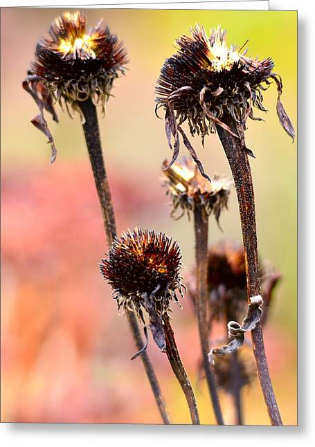 Despair Greeting Cards - Wilted flower  Greeting Card by Toppart Sweden