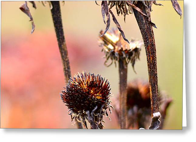 Wilted flower  Greeting Card by Toppart Sweden