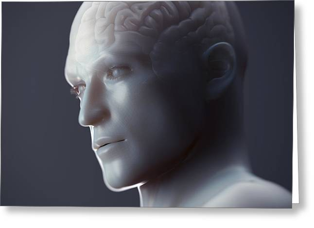 Human Forms Greeting Cards - Human Brain Greeting Card by Science Picture Co