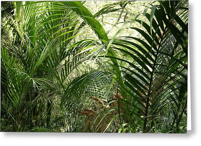 New Zealand Photographs Greeting Cards - Jungle Greeting Card by Les Cunliffe