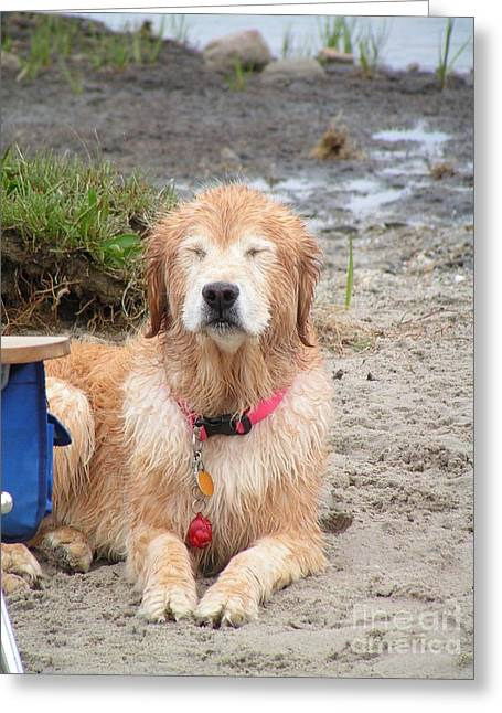 Photos Greeting Cards - #854 D475 Golden Zen Golden Retriever Meditative State Enlightenment  Greeting Card by Robin Lee Mccarthy Photography