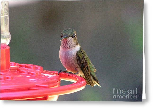 Photos Greeting Cards - #871 D492 Hummingbird at My Feeder  At the Table Greeting Card by Robin Lee Mccarthy Photography