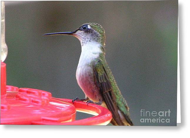 Greeting Cards Greeting Cards - #872 D493 Lending An Ear Hummingbird Greeting Card by Robin Lee Mccarthy Photography