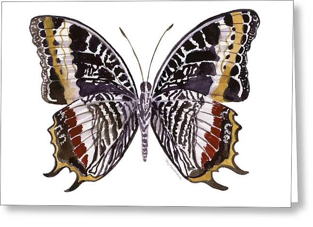 White Background Greeting Cards - 88 Castor Butterfly Greeting Card by Amy Kirkpatrick