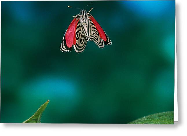 89 Butterfly in Flight Greeting Card by Stephen Dalton