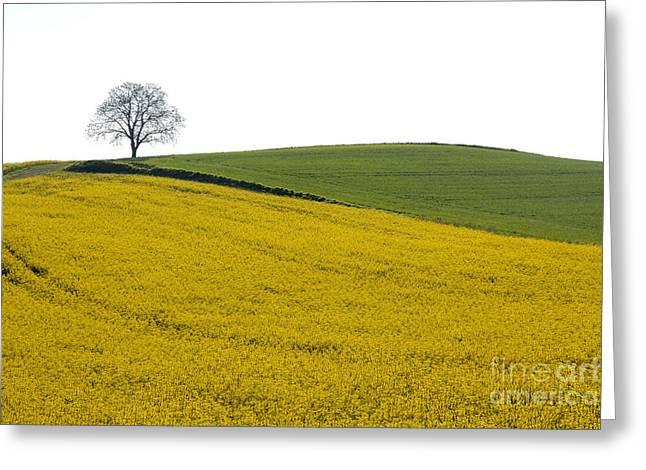 Limagne Greeting Cards - Agricultural landscape. Auvergne. France. Greeting Card by Bernard Jaubert
