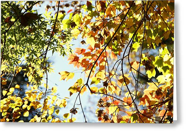 Autumn Photographs Photographs Greeting Cards - Autumn  Greeting Card by Les Cunliffe