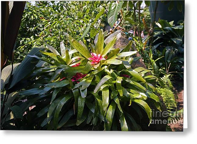 Bromeliad Greeting Cards - Bromeliad Plant Greeting Card by Dr. Keith Wheeler
