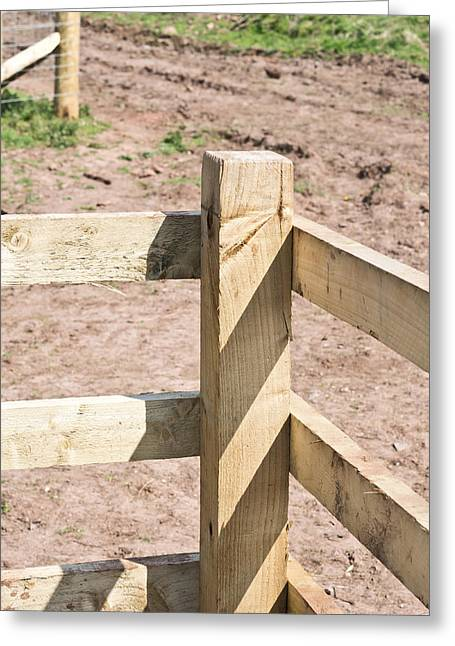 Timber Posts Greeting Cards - Fence Greeting Card by Tom Gowanlock