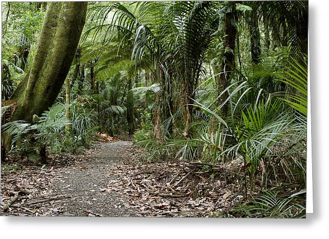 Tropical Photographs Greeting Cards - Forest Greeting Card by Les Cunliffe