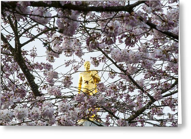 Blossom Greeting Cards - Gold Man and Cherry Blossoms Greeting Card by Mandy Judson