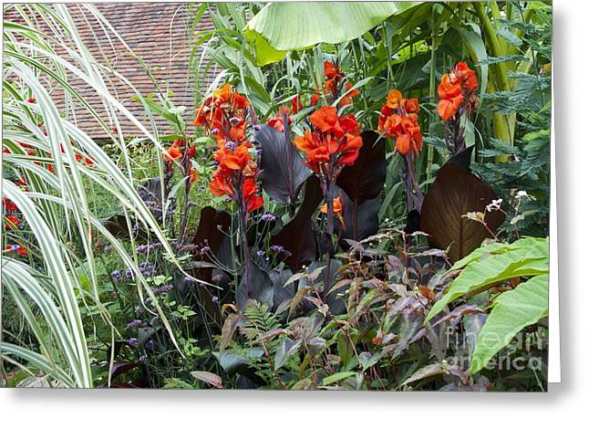 Canna Photographs Greeting Cards - Great Dixter, East Sussex, Uk Greeting Card by Carol Casselden