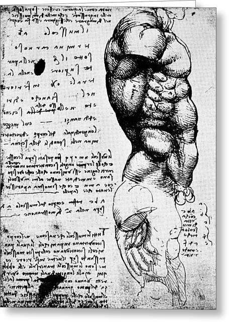 1506 Greeting Cards - Leonardo: Anatomy Greeting Card by Granger