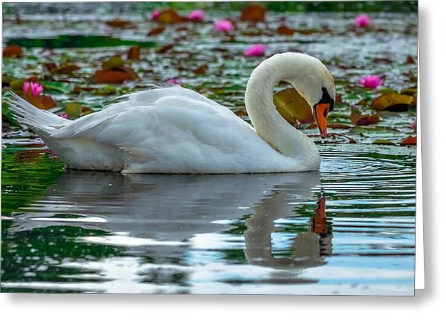Graceful Lotus Greeting Cards - Lotus Swan Greeting Card by Brian Stevens