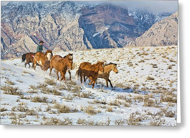 North America, Usa, Wyoming, Shell, Big Greeting Card by Terry Eggers