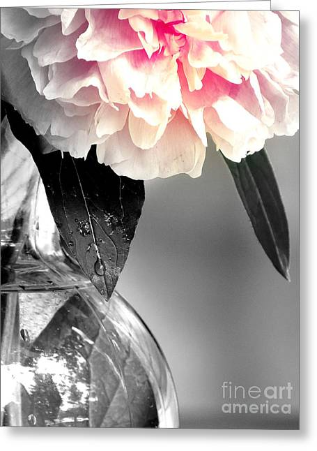 Peony Greeting Card by France Laliberte