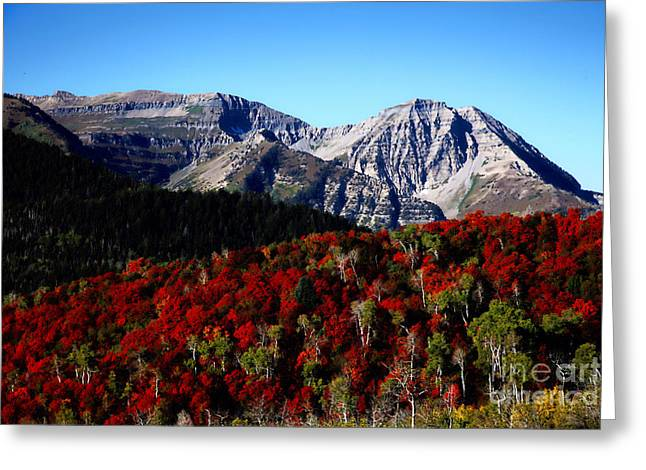 Beauty Mark Greeting Cards - Rocky Mountain Fall Greeting Card by Southern Utah  Photography