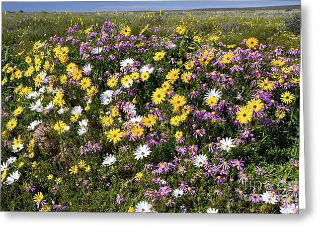 South African Wildflowers Greeting Card by Bob Gibbons