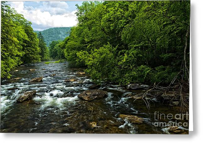 Allegheny Greeting Cards - Spring along Cranberry River Greeting Card by Thomas R Fletcher
