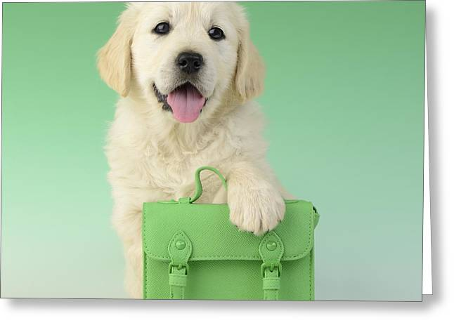 Puppies Greeting Cards - 9 To 5 Labrador Greeting Card by Greg Cuddiford