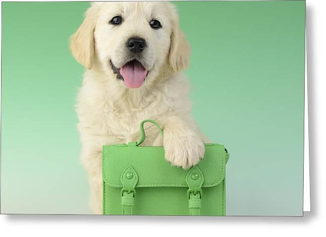 Retriever Puppies Greeting Cards - 9 To 5 Labrador Greeting Card by Greg Cuddiford