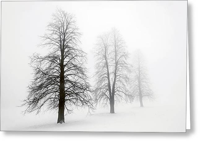 Winter Trees Greeting Cards - Winter trees in fog Greeting Card by Elena Elisseeva
