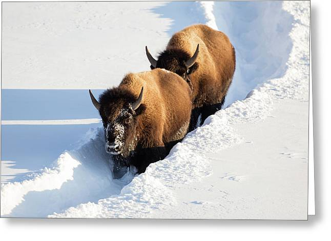 Wyoming, Yellowstone National Park Greeting Card by Elizabeth Boehm