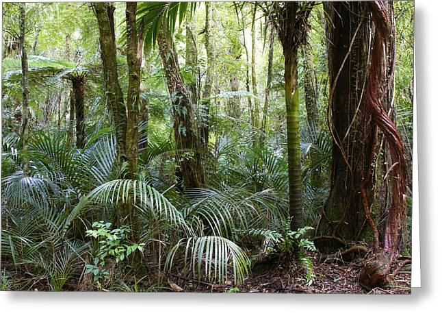 New Zealand Greeting Cards - Jungle Greeting Card by Les Cunliffe