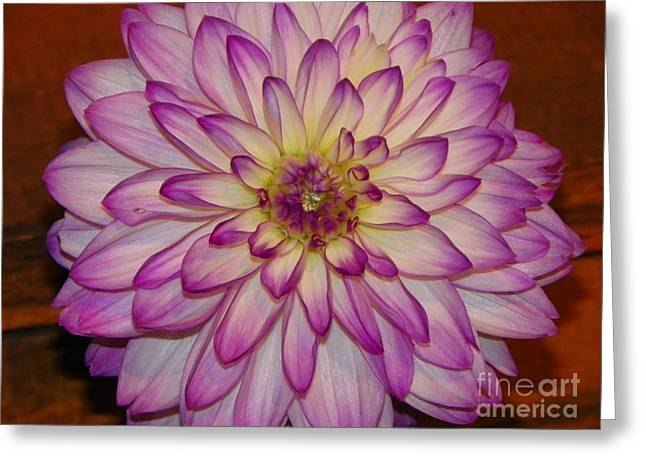 Recently Sold -  - Flower Design Greeting Cards - #928 d795 Dahlia Awesome Greeting Card by Robin Lee Mccarthy Photography