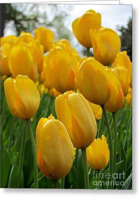 Floral Digital Art Greeting Cards - Tulips Greeting Card by France Laliberte