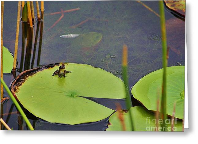 Saw Greeting Cards - A Baby Bullfrog Greeting Card by Chuck  Hicks
