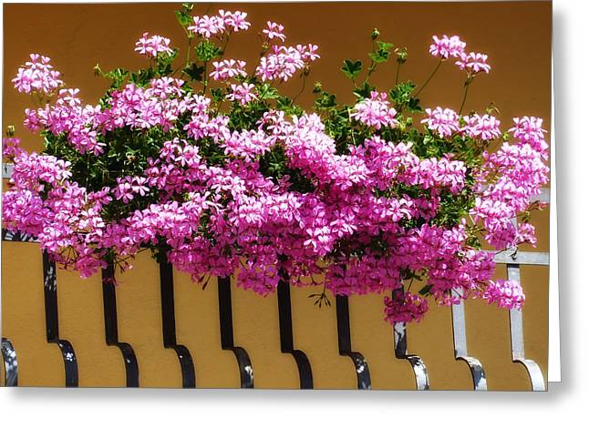 Macro Geranium Flower Greeting Cards - A Balcony Welcomes Spring Greeting Card by Mountain Dreams